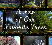 A Few of Our Favorite Trees